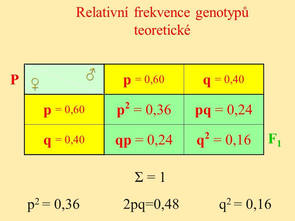 Relativní frekvence genotypů teoretické