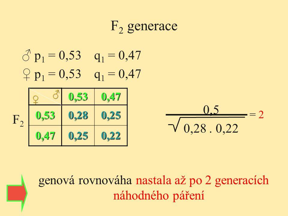 genová rovnováha nastala až po 2 generacích náhodného páření