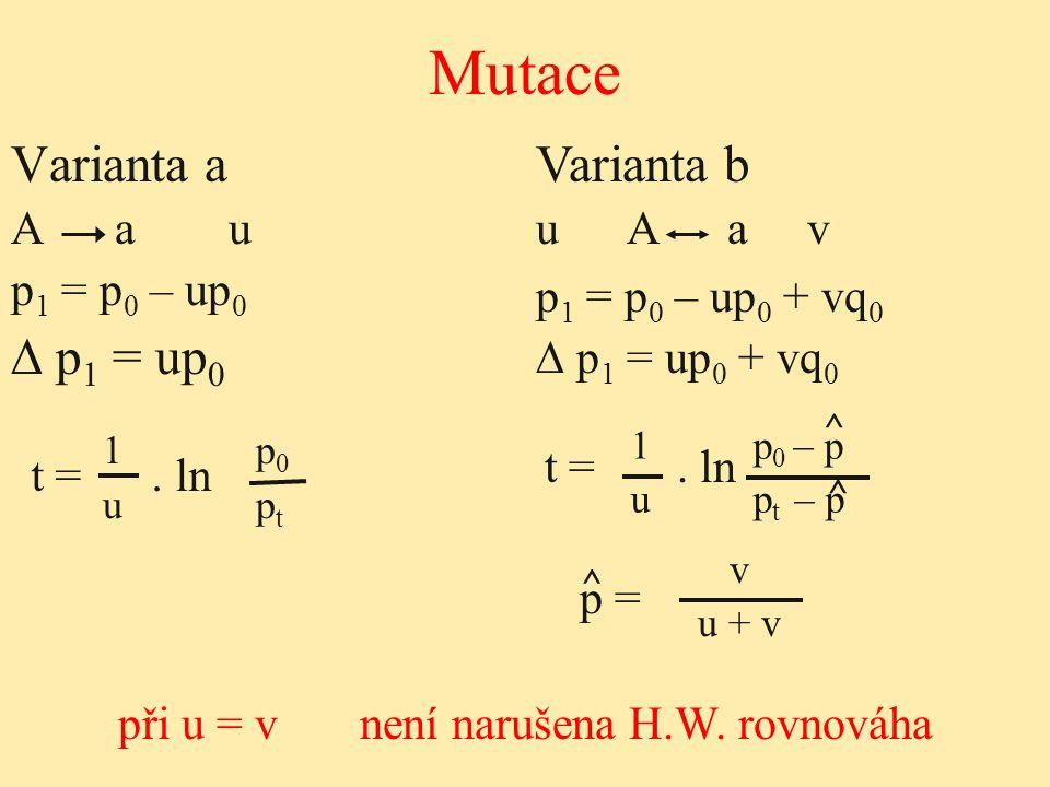 při u = v není narušena H.W. rovnováha
