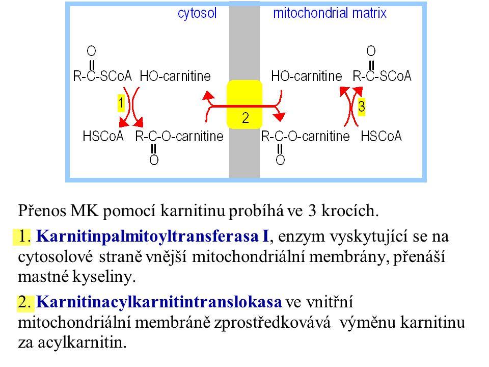Přenos MK pomocí karnitinu probíhá ve 3 krocích.