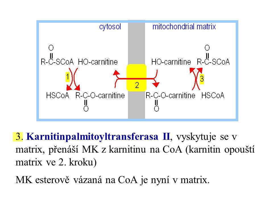3. Karnitinpalmitoyltransferasa II, vyskytuje se v matrix, přenáší MK z karnitinu na CoA (karnitin opouští matrix ve 2. kroku)