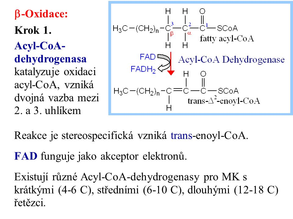 b-Oxidace: Krok 1. Acyl-CoA-dehydrogenasa katalyzuje oxidaci acyl-CoA, vzniká dvojná vazba mezi 2. a 3. uhlíkem.
