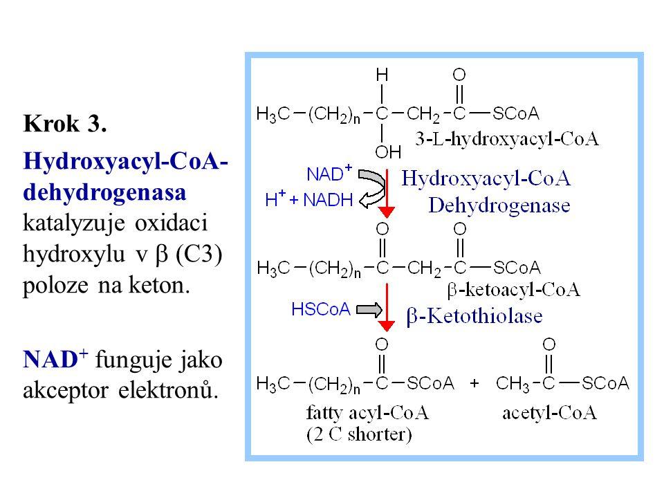 Krok 3. Hydroxyacyl-CoA- dehydrogenasa katalyzuje oxidaci hydroxylu v b (C3) poloze na keton.
