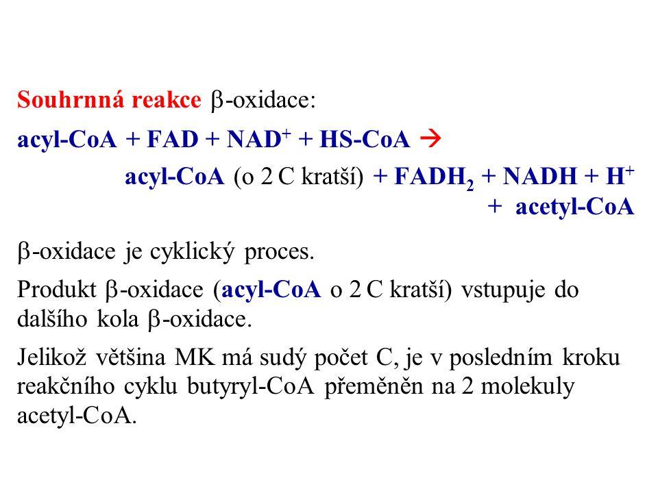 Souhrnná reakce b-oxidace: