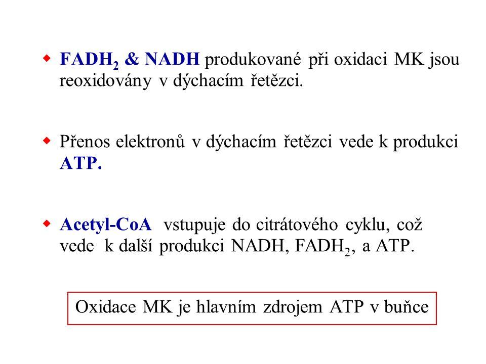 Oxidace MK je hlavním zdrojem ATP v buňce