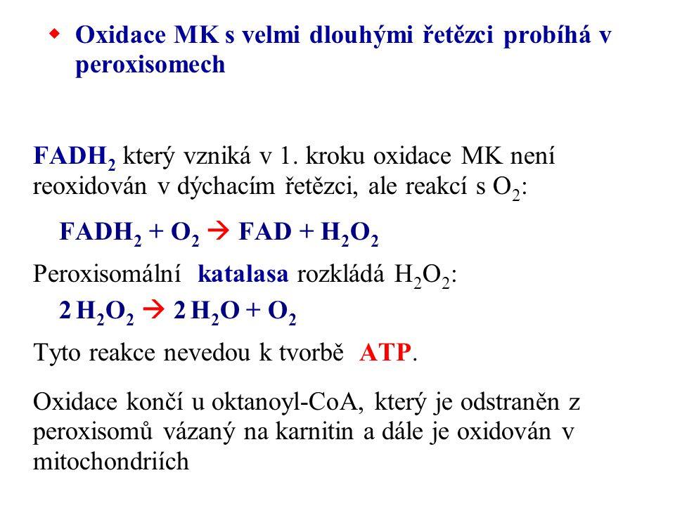 Oxidace MK s velmi dlouhými řetězci probíhá v peroxisomech