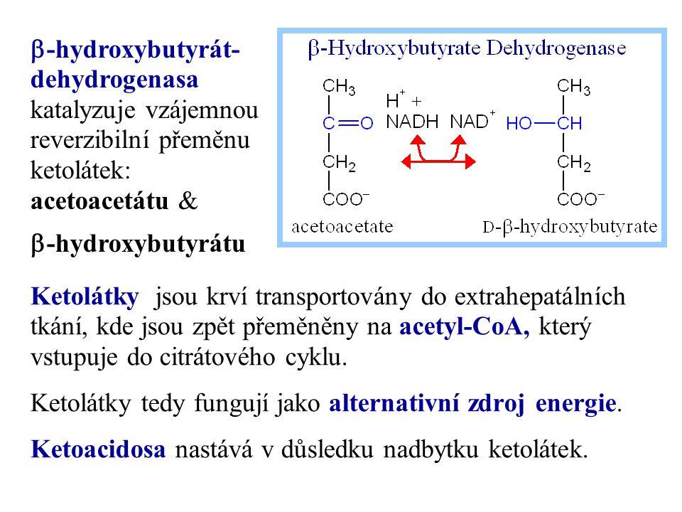 b-hydroxybutyrát-dehydrogenasa katalyzuje vzájemnou reverzibilní přeměnu ketolátek: acetoacetátu &