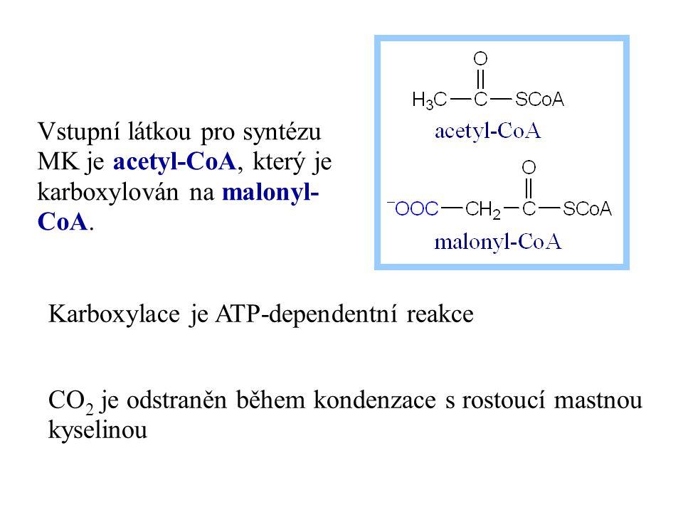 Vstupní látkou pro syntézu MK je acetyl-CoA, který je karboxylován na malonyl-CoA.