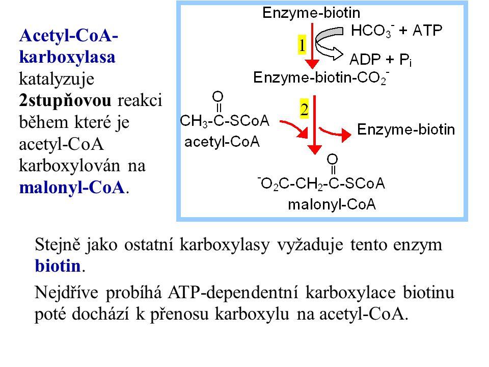 Acetyl-CoA- karboxylasa katalyzuje 2stupňovou reakci během které je acetyl-CoA karboxylován na malonyl-CoA.
