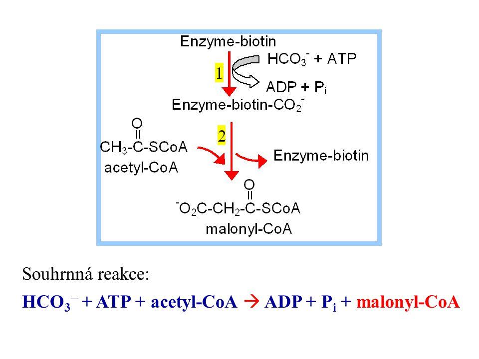 Souhrnná reakce: HCO3- + ATP + acetyl-CoA  ADP + Pi + malonyl-CoA