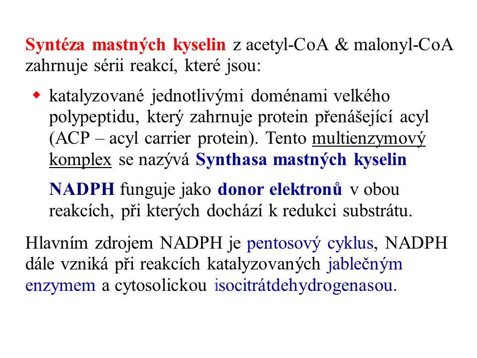Syntéza mastných kyselin z acetyl-CoA & malonyl-CoA zahrnuje sérii reakcí, které jsou: