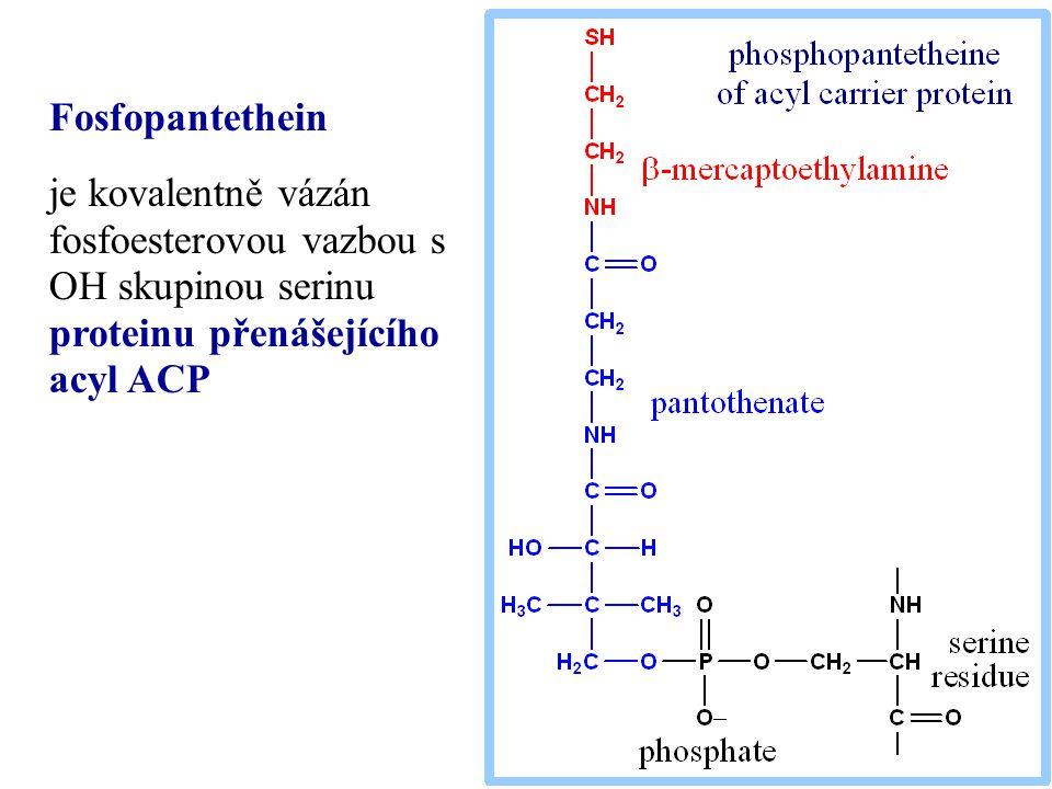 Fosfopantethein je kovalentně vázán fosfoesterovou vazbou s OH skupinou serinu proteinu přenášejícího acyl ACP.