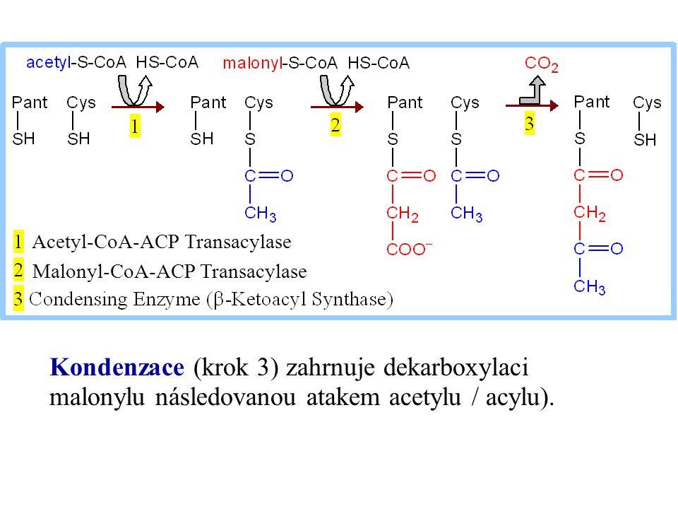 Acetyl-CoA-ACP Transacylase