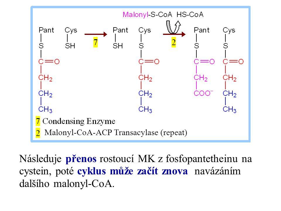 Malonyl-CoA-ACP Transacylase (repeat)