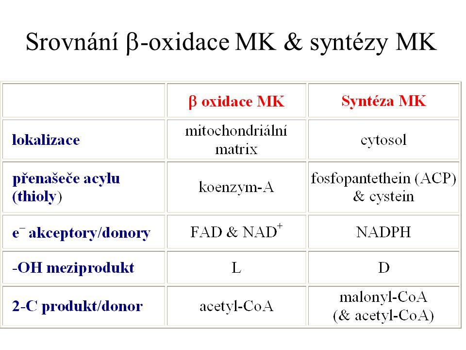 Srovnání b-oxidace MK & syntézy MK