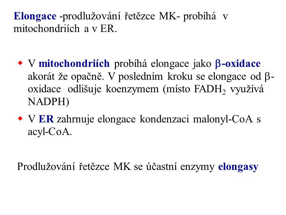 Elongace -prodlužování řetězce MK- probíhá v mitochondriích a v ER.