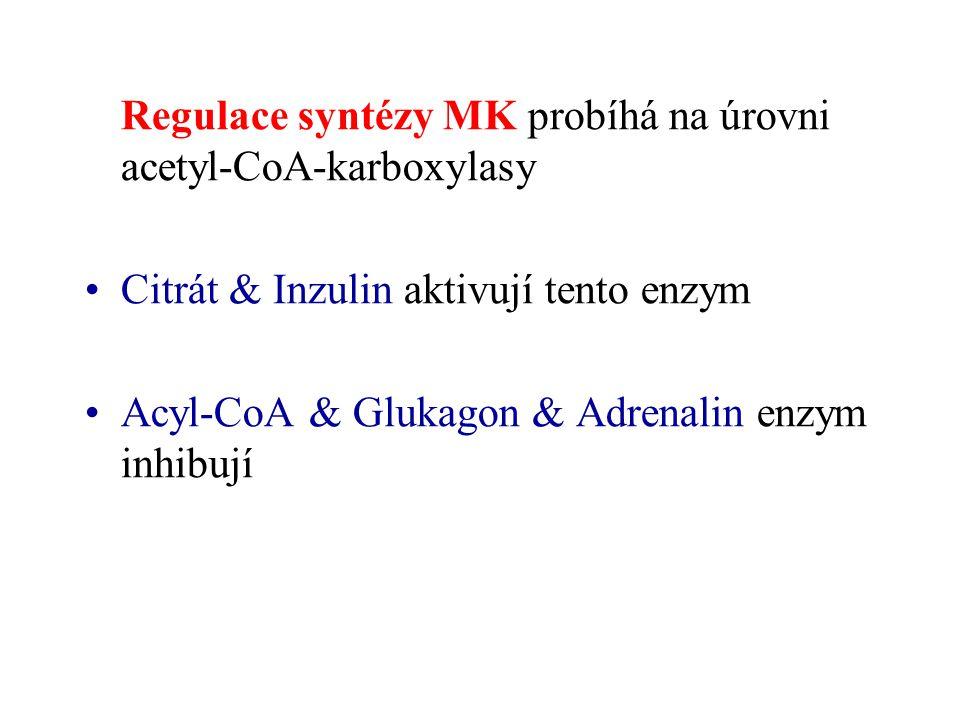 Regulace syntézy MK probíhá na úrovni acetyl-CoA-karboxylasy