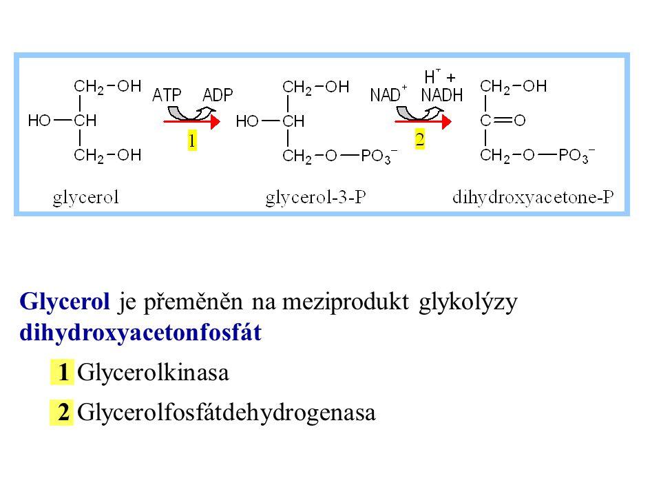 Glycerol je přeměněn na meziprodukt glykolýzy dihydroxyacetonfosfát