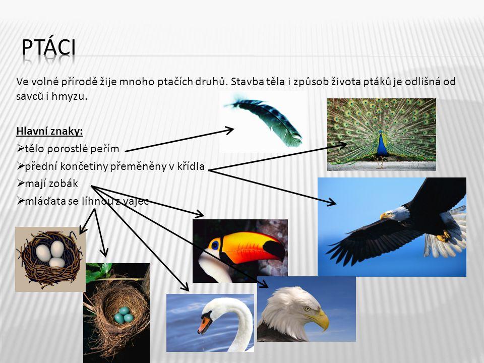 ptáci Ve volné přírodě žije mnoho ptačích druhů. Stavba těla i způsob života ptáků je odlišná od savců i hmyzu.