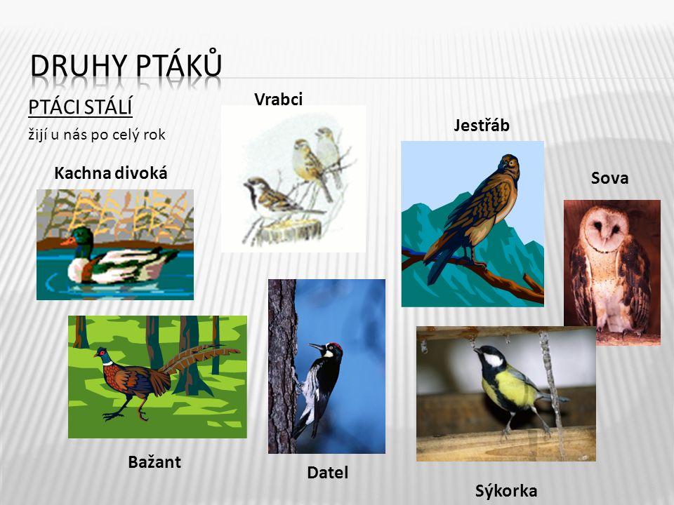 Druhy ptáků PTÁCI STÁLÍ Vrabci Jestřáb Kachna divoká Sova Bažant Datel