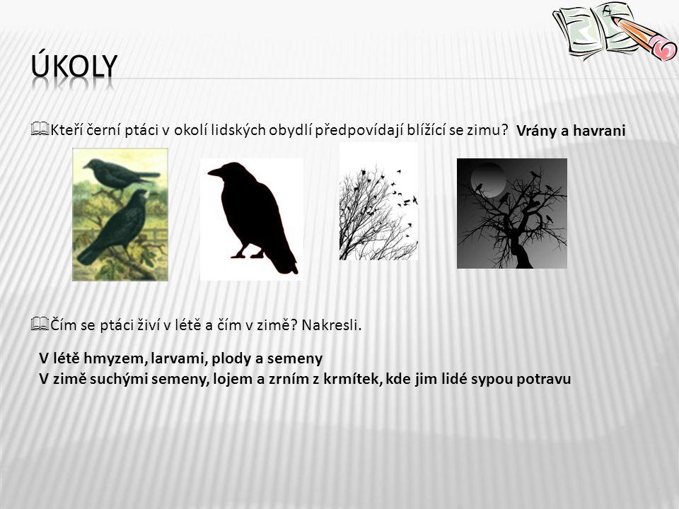 úkoly Kteří černí ptáci v okolí lidských obydlí předpovídají blížící se zimu Čím se ptáci živí v létě a čím v zimě Nakresli.