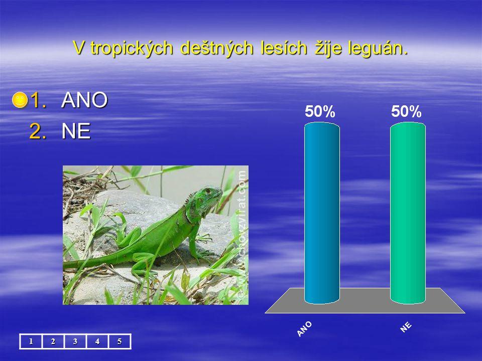 V tropických deštných lesích žije leguán.