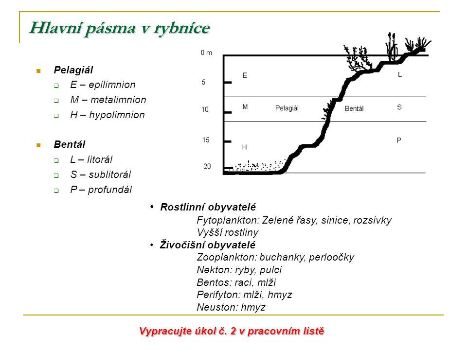 Hlavní pásma v rybníce Rostlinní obyvatelé Pelagiál E – epilimnion
