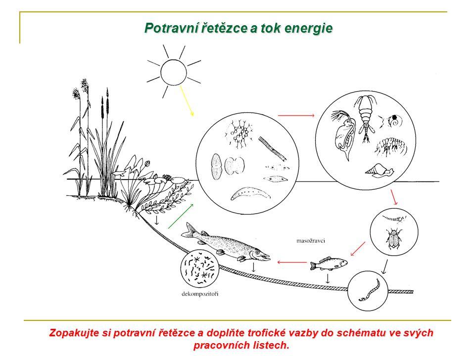 Potravní řetězce a tok energie