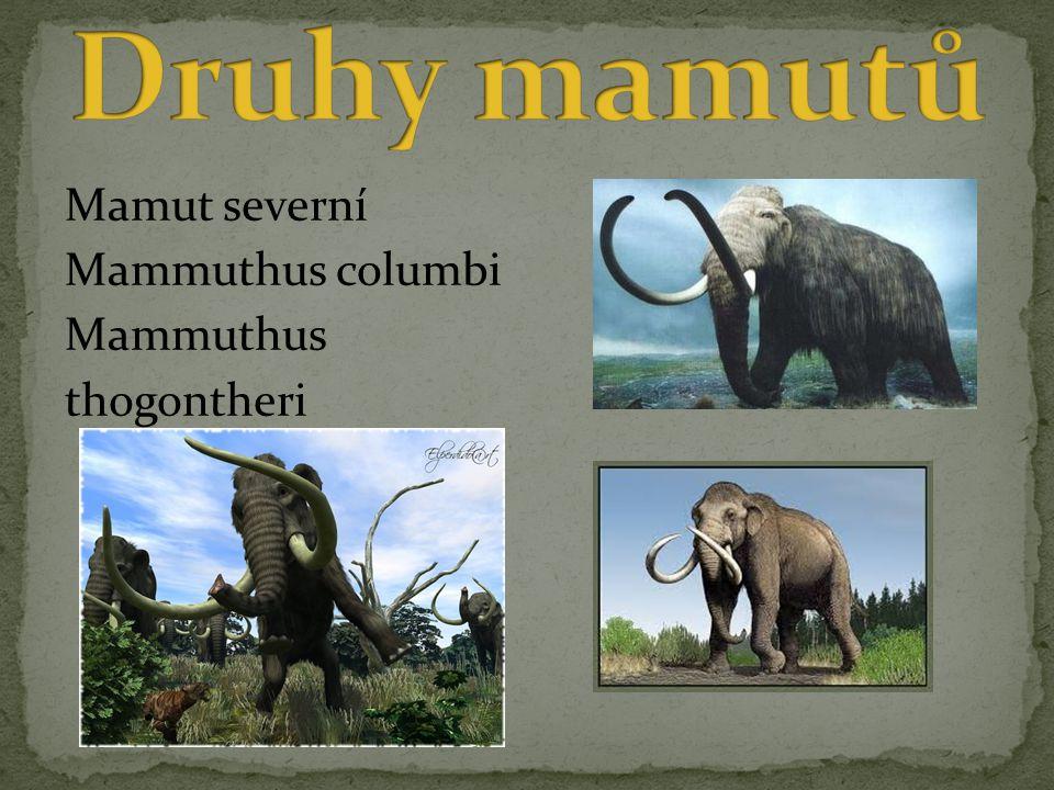 Druhy mamutů Mamut severní Mammuthus columbi Mammuthus thogontheri