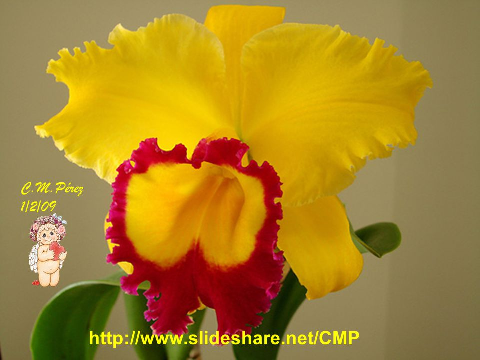 C.M.Pérez 1/2/09 http://www.slideshare.net/CMP