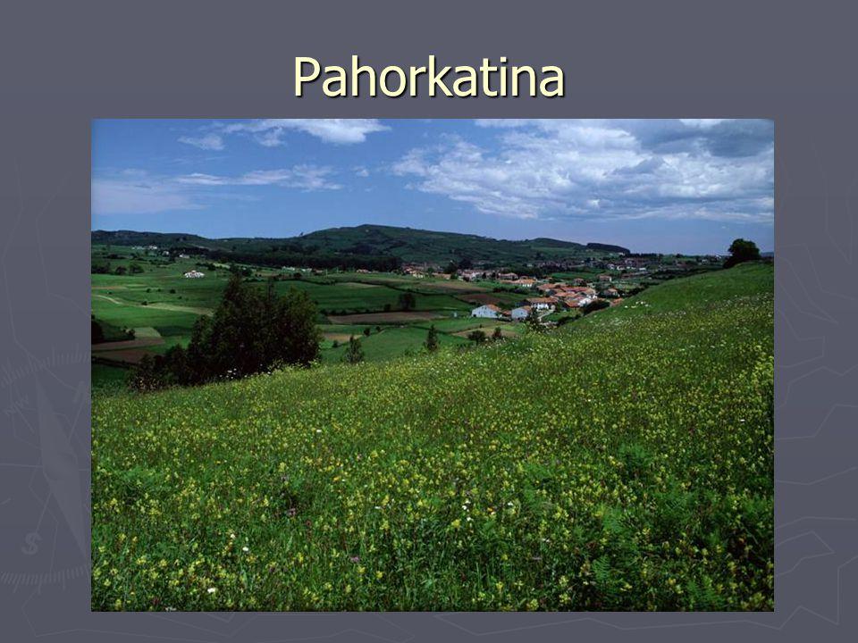 Pahorkatina