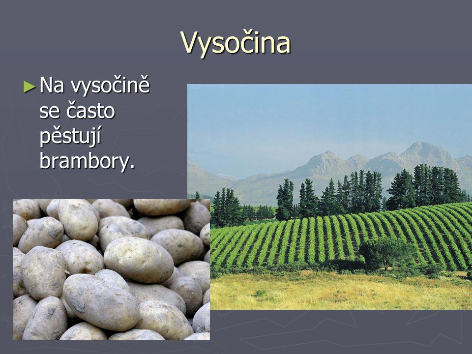 Vysočina Na vysočině se často pěstují brambory.