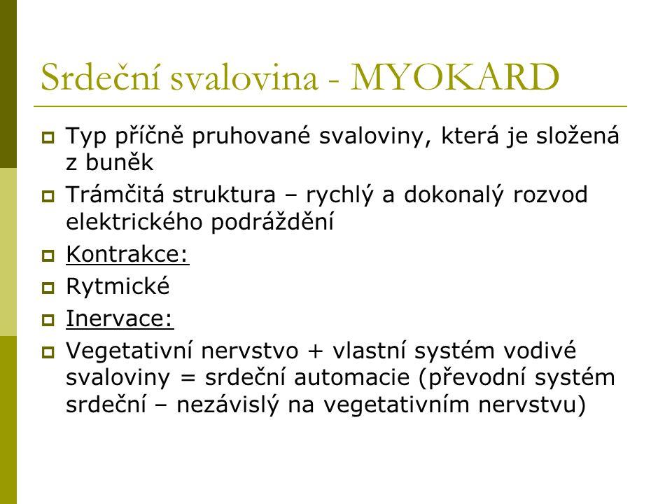 Srdeční svalovina - MYOKARD