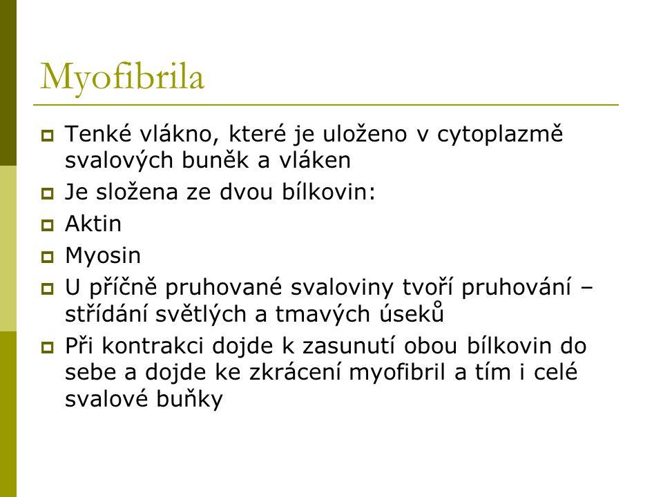 Myofibrila Tenké vlákno, které je uloženo v cytoplazmě svalových buněk a vláken. Je složena ze dvou bílkovin: