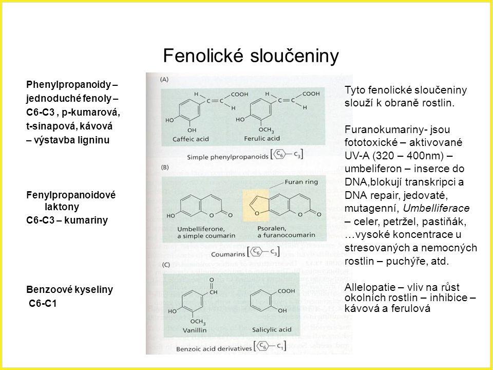 Fenolické sloučeniny Phenylpropanoidy – jednoduché fenoly – C6-C3 , p-kumarová, t-sinapová, kávová.