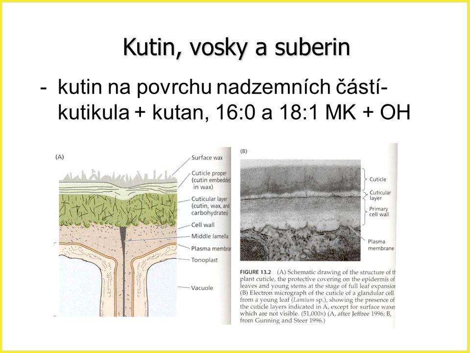 Kutin, vosky a suberin kutin na povrchu nadzemních částí-kutikula + kutan, 16:0 a 18:1 MK + OH.
