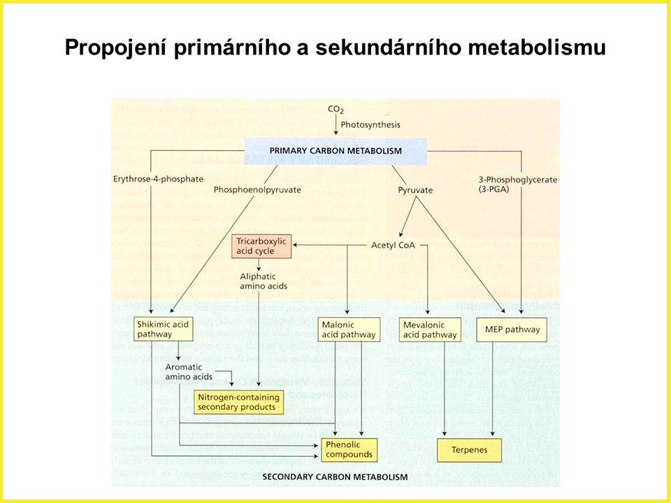 Propojení primárního a sekundárního metabolismu