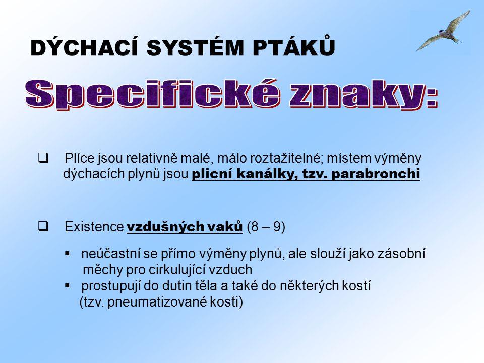 Specifické znaky: DÝCHACÍ SYSTÉM PTÁKŮ