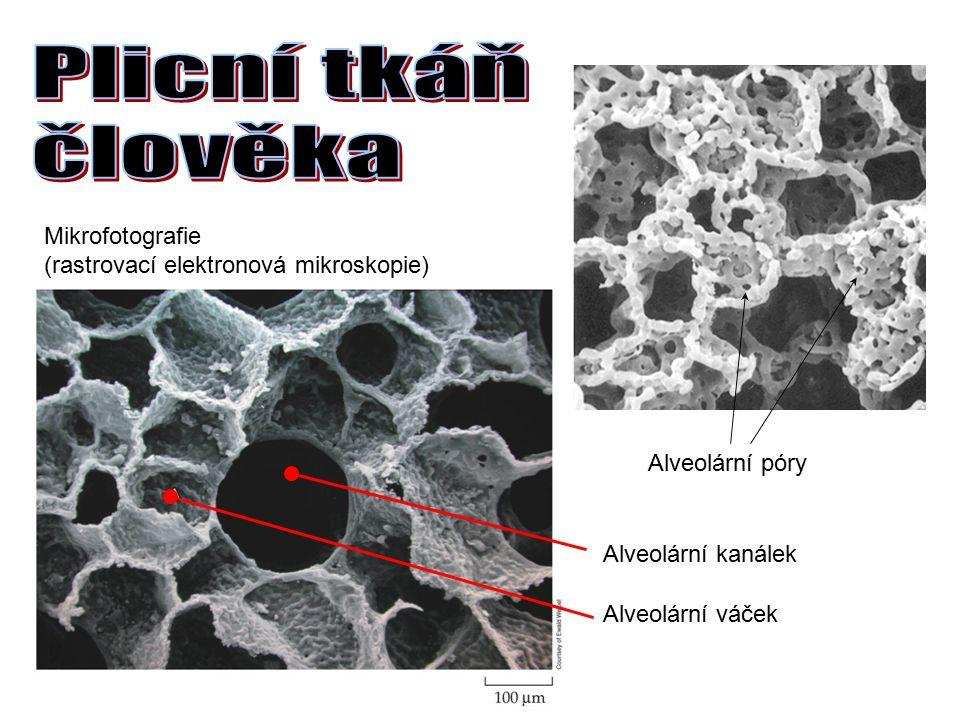 Plicní tkáň člověka Mikrofotografie