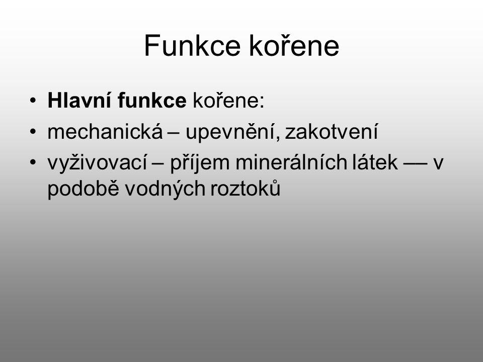 Funkce kořene Hlavní funkce kořene: mechanická – upevnění, zakotvení
