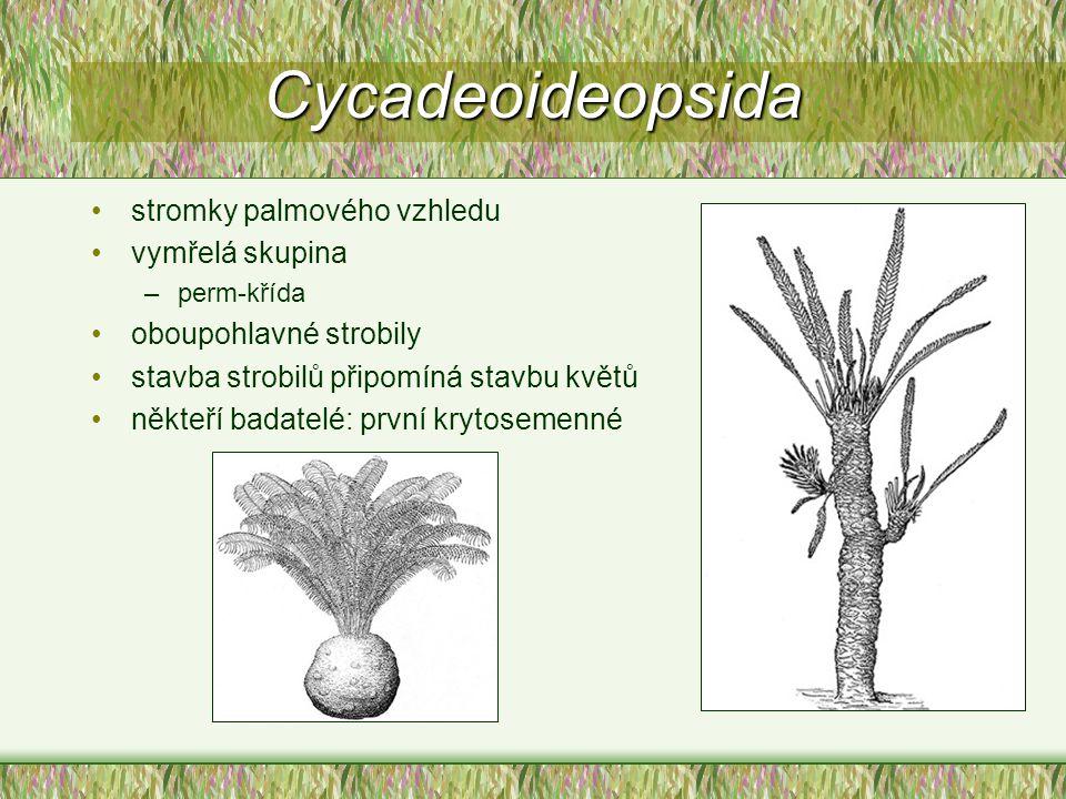 Cycadeoideopsida stromky palmového vzhledu vymřelá skupina