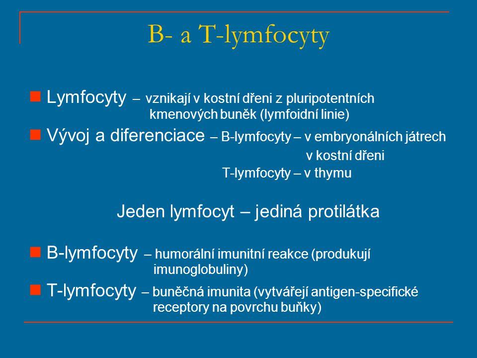 B- a T-lymfocyty Lymfocyty – vznikají v kostní dřeni z pluripotentních kmenových buněk (lymfoidní linie)