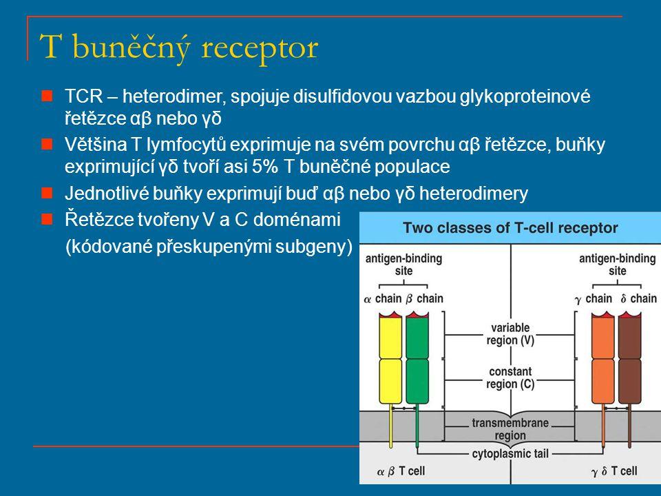 T buněčný receptor TCR – heterodimer, spojuje disulfidovou vazbou glykoproteinové řetězce αβ nebo γδ.