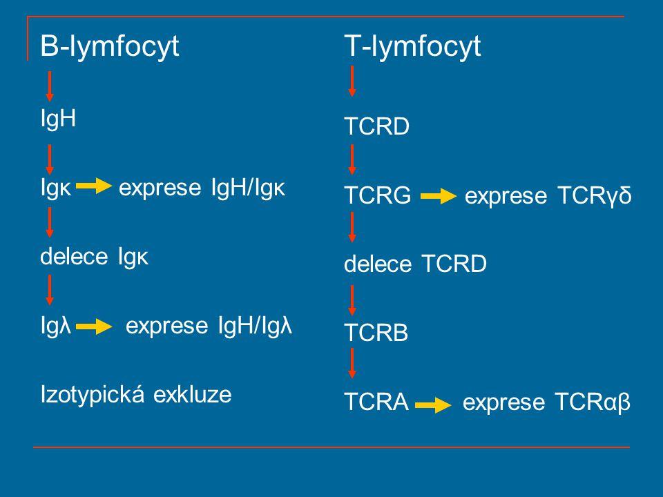 B-lymfocyt T-lymfocyt IgH TCRD Igκ exprese IgH/Igκ TCRG exprese TCRγδ