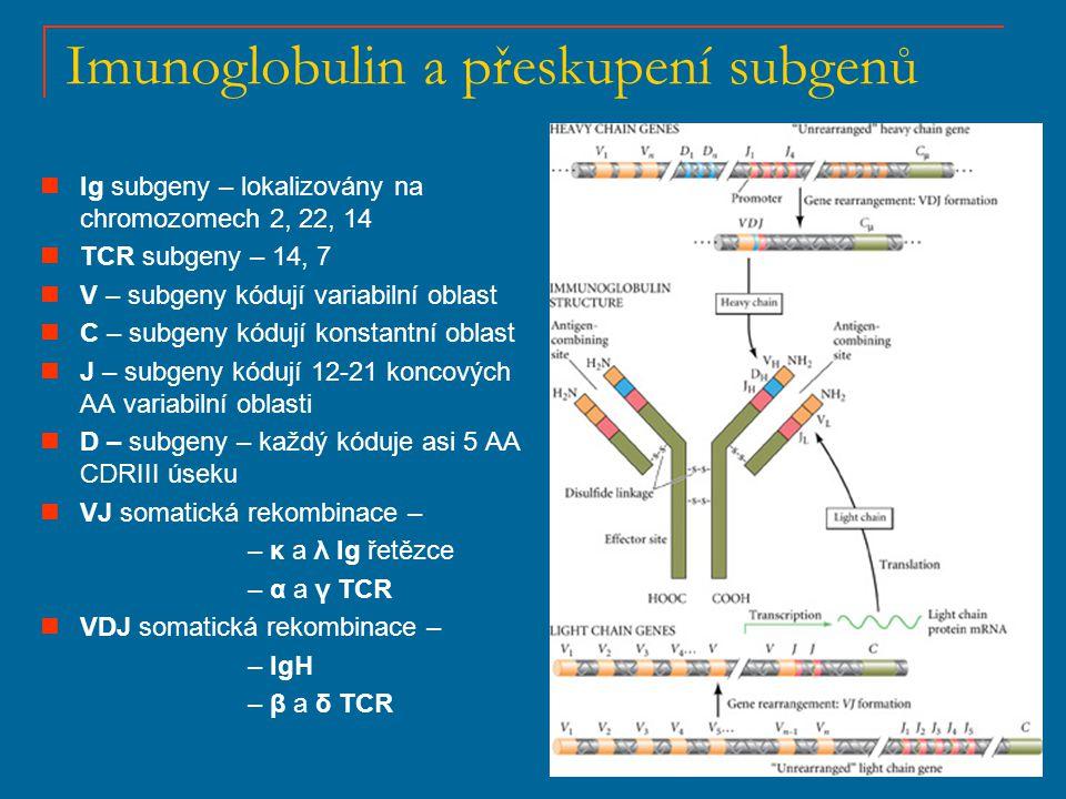 Imunoglobulin a přeskupení subgenů