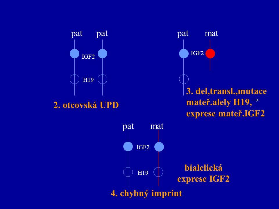 bialelická exprese IGF2