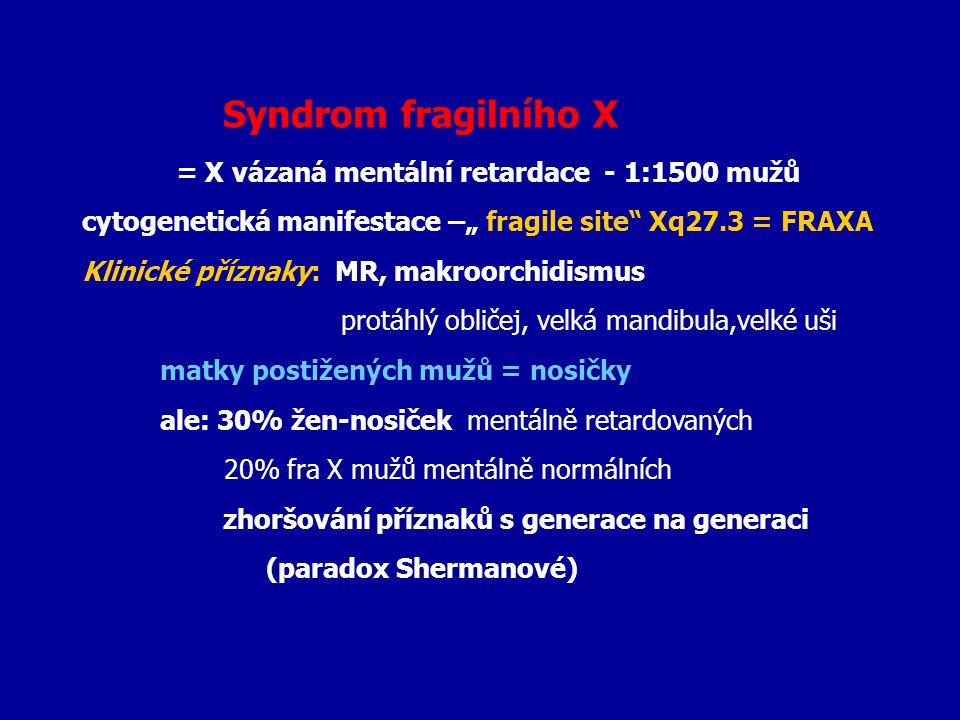 """Syndrom fragilního X = X vázaná mentální retardace - 1:1500 mužů. cytogenetická manifestace –"""" fragile site Xq27.3 = FRAXA."""