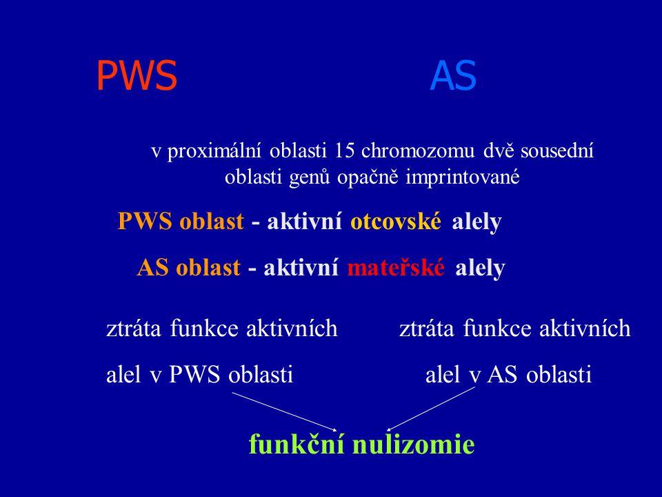 PWS AS funkční nulizomie PWS oblast - aktivní otcovské alely