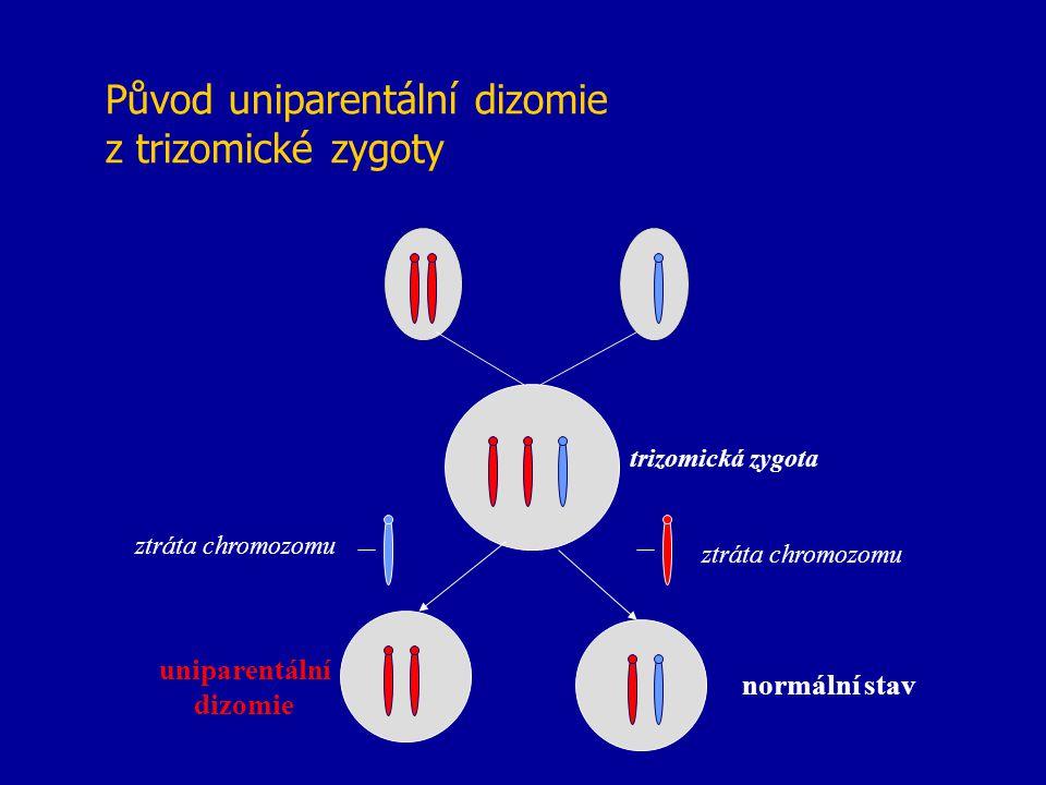 Původ uniparentální dizomie z trizomické zygoty