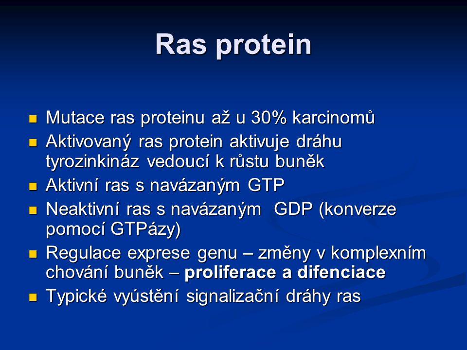 Ras protein Mutace ras proteinu až u 30% karcinomů